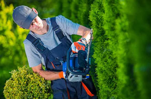 Hedge Cutting Dagenham (RM8)