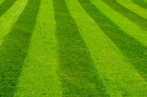 Lawn Care Chelmsford (01245)