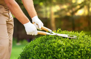 Gardeners Tiptree UK