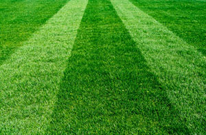 Lawn Care Slough (01753)